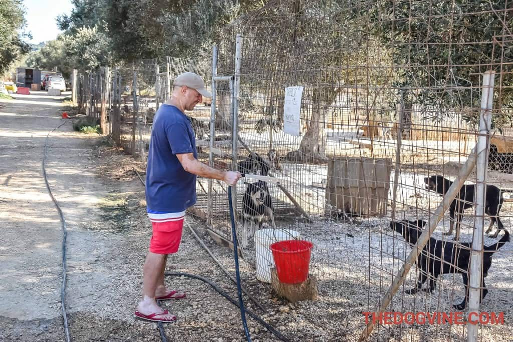 Animal Rescue Kefalonia - Watering Duties
