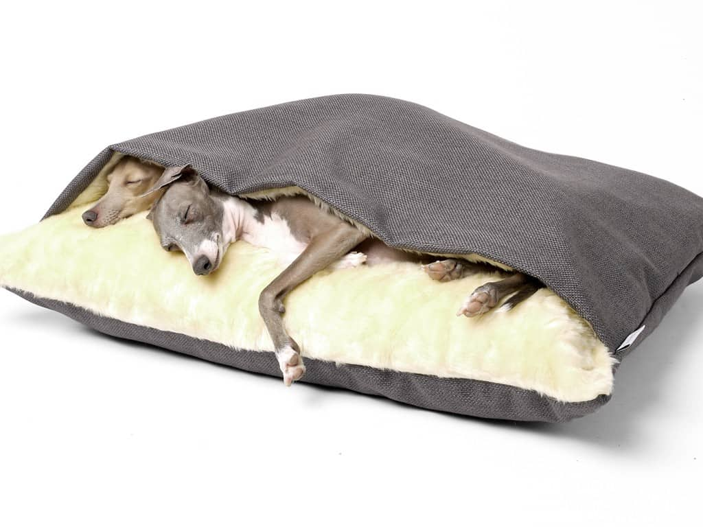 gift-ideas-for-dogs-charley-chau