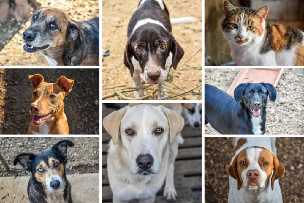 Animal Rescue Kefalonia Collage 1