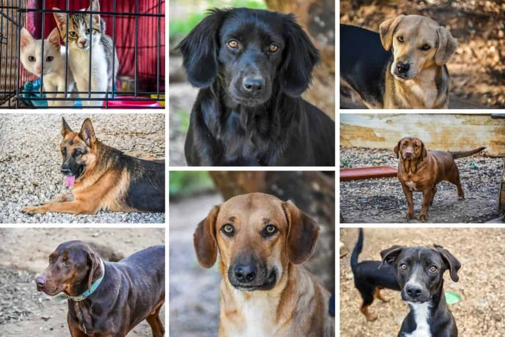 Animal Rescue Kefalonia Collage 2