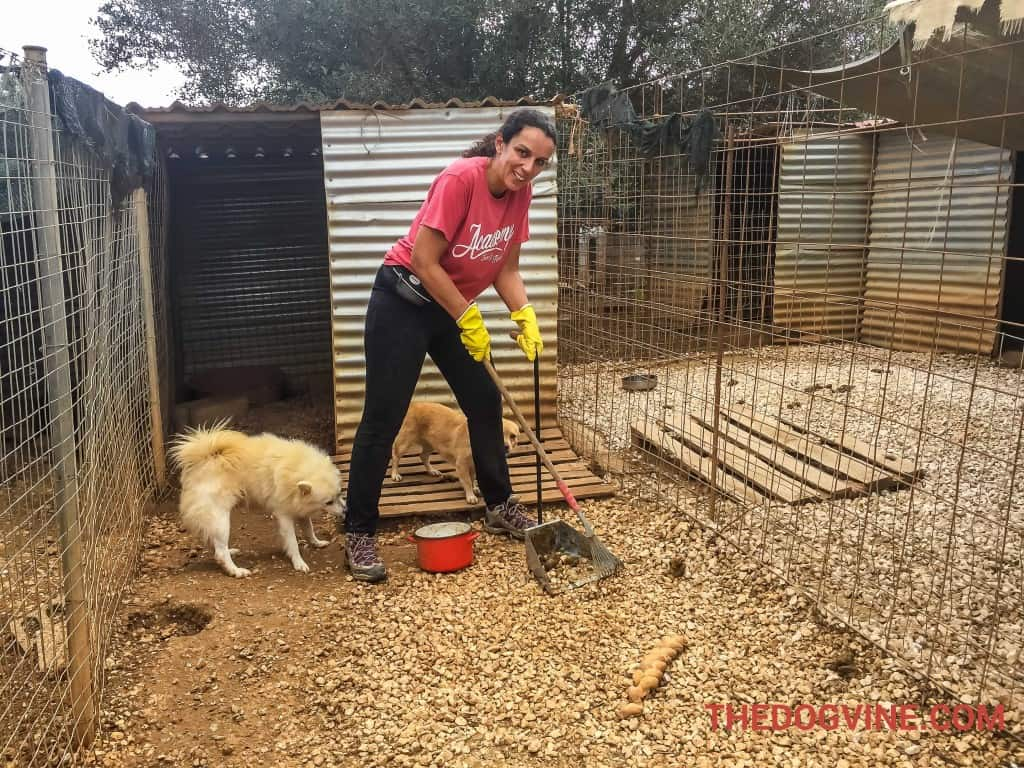 Animal Rescue Kefalonia Volunteering 2