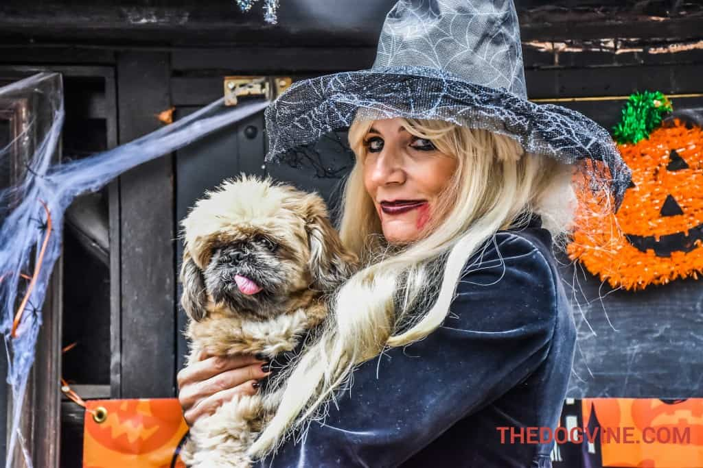 Michelle Collins - All Dogs Matter Halloween Walk - October 2017 Events Agenda For London Dogs
