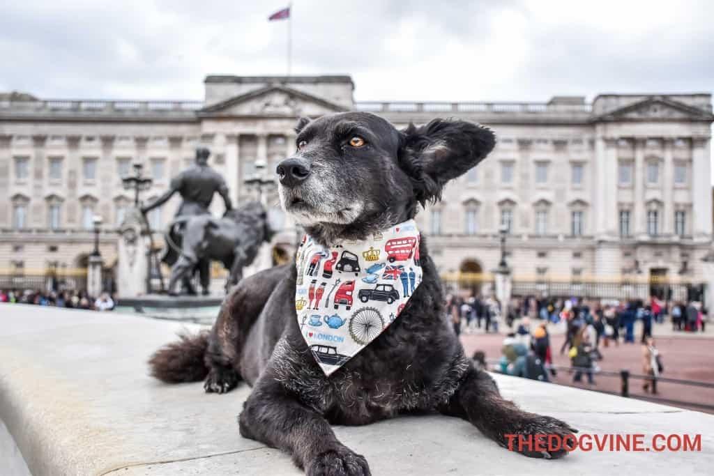 london-bus-tour-for-dogs-buckingham-palace