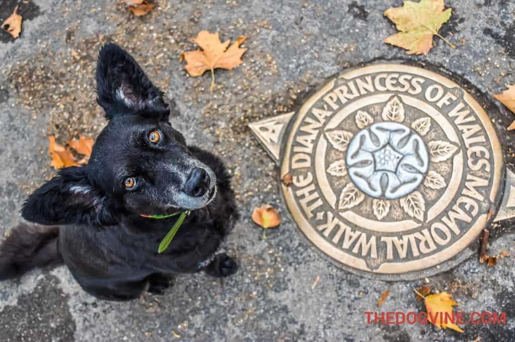 london-bus-tour-for-dogs-diana-memorial-walk