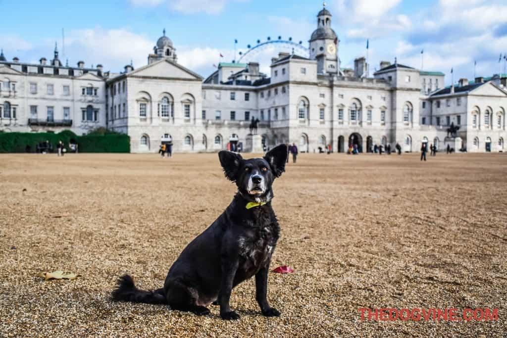 london-bus-tour-for-dogs-horse-guards-parade