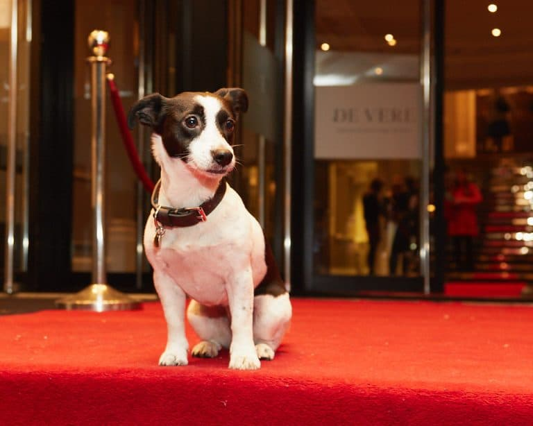 December 2017 Events Agenda For London Dogs - Dogstar_Mayhew-Tinsel-and-Tails