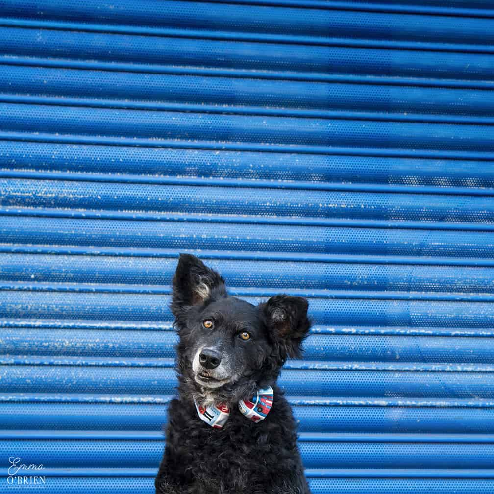 Belinha London Dog Photo Shoot with Emma OBrien_0098