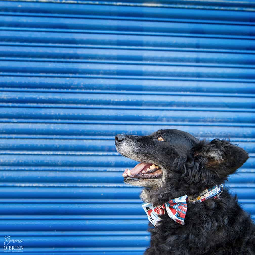 Belinha London Dog Photo Shoot with Emma OBrien_0106