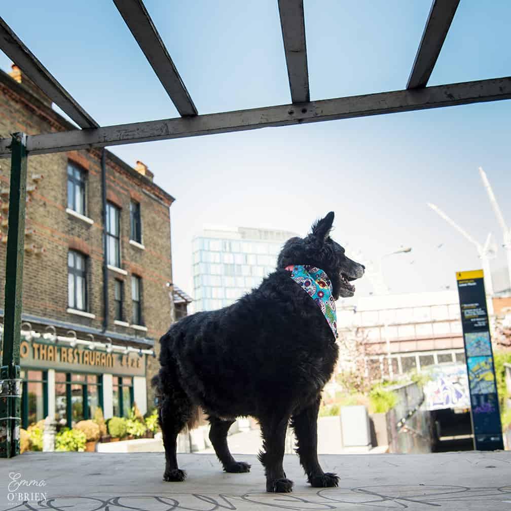 Belinha London Dog Photoshoot with Emma OBrien_0111