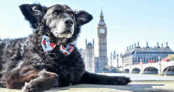 FB May 2017 Events Agenda For London Dogs