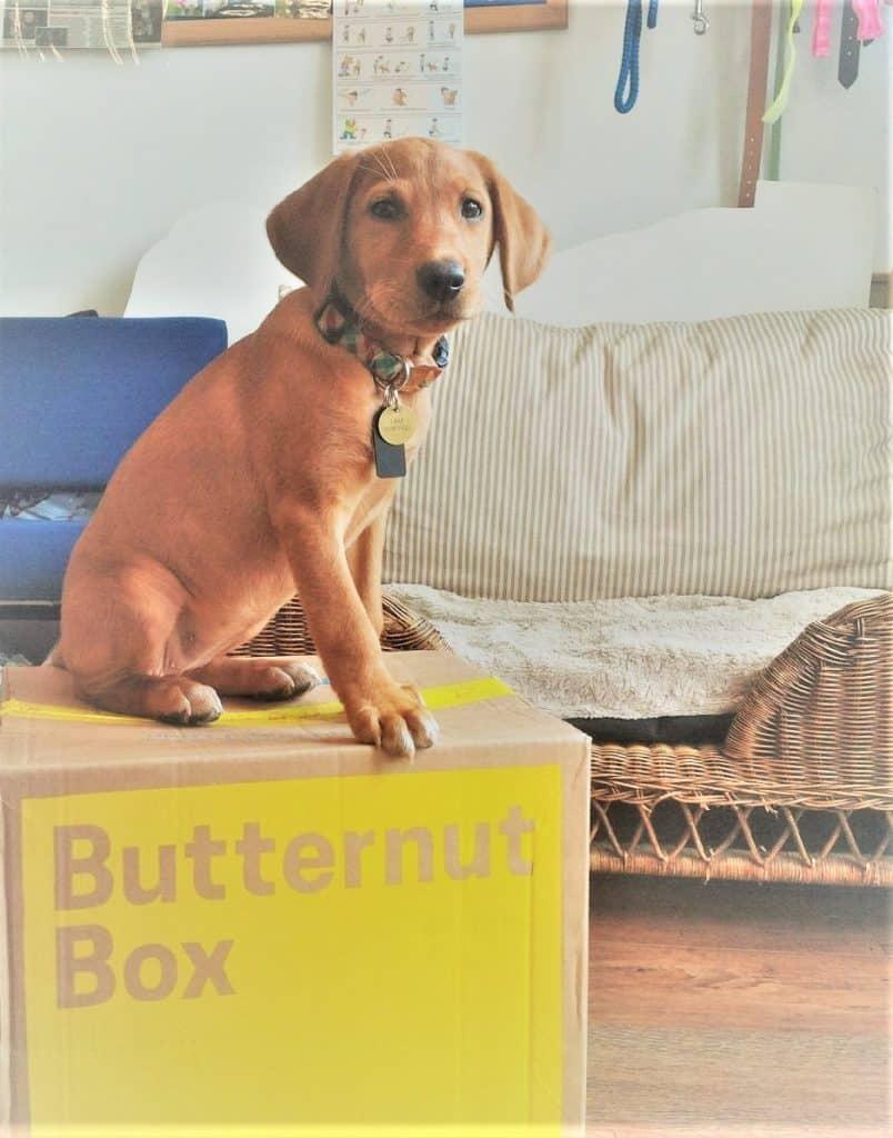 Butternut Box 1