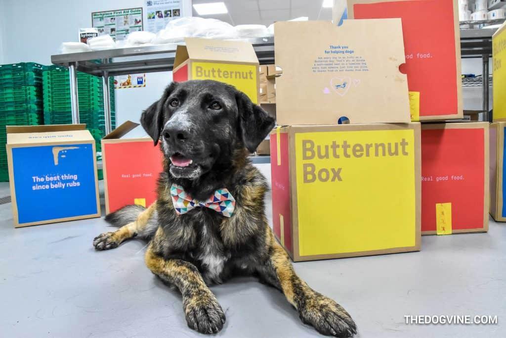 Butternut Box 12