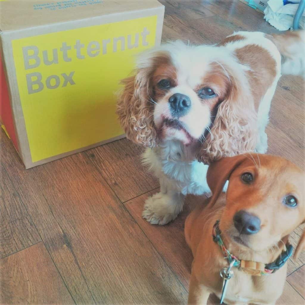 Butternut Box 21