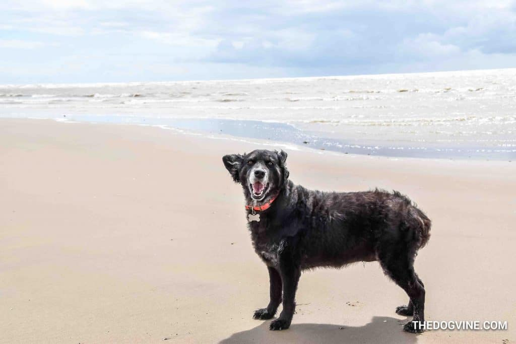 Camber Sands 11