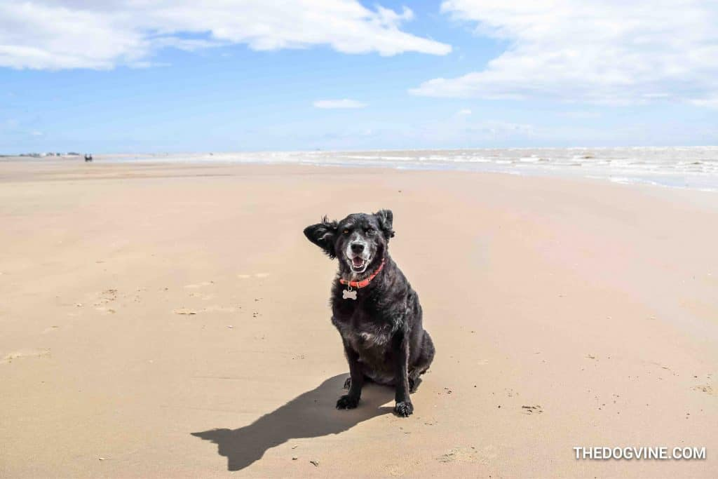 Camber Sands 13