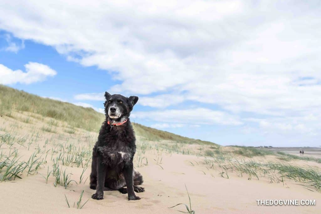 Camber Sands 4