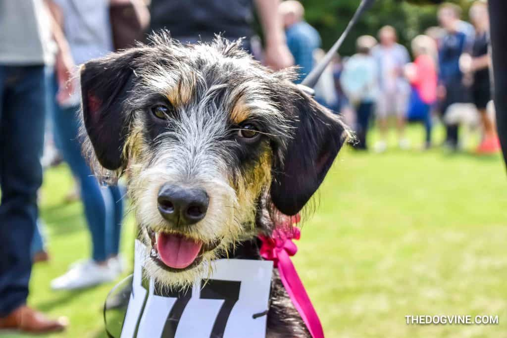 Chiswick House Dog Show 17