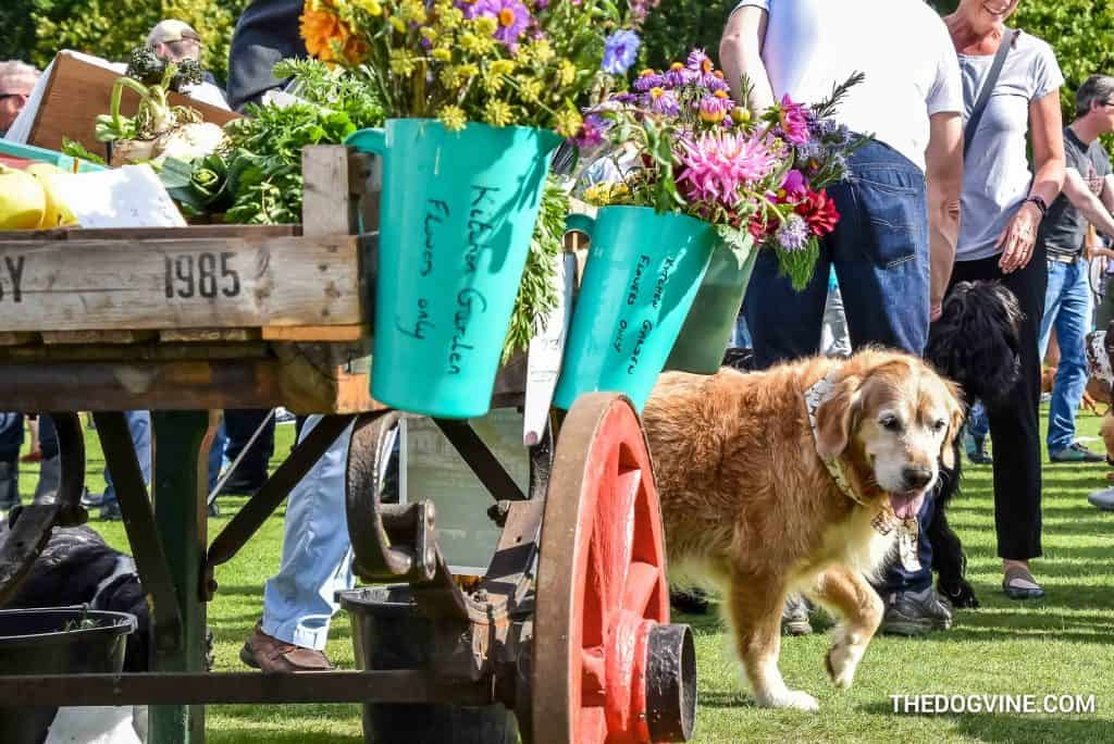 Chiswick House Dog Show 23