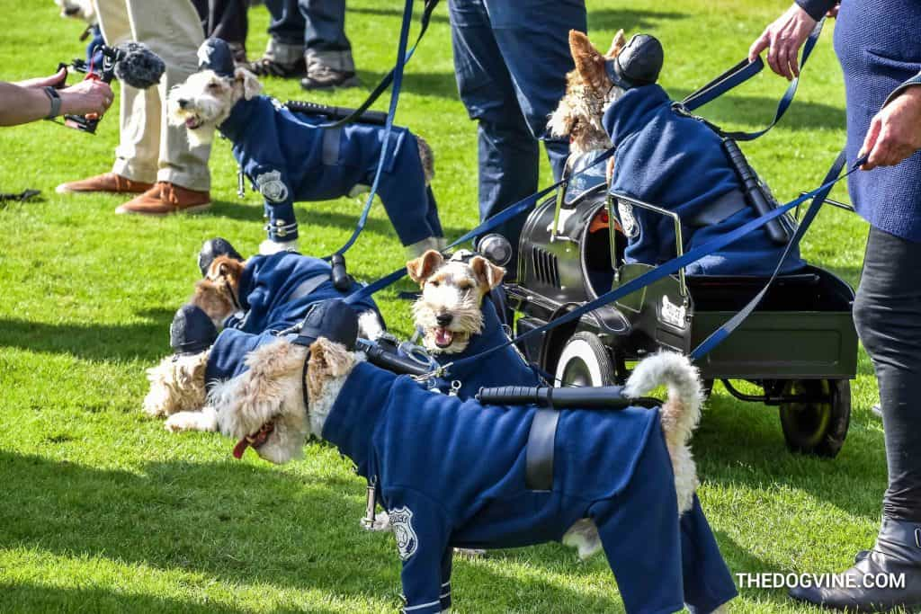 Chiswick House Dog Show 3