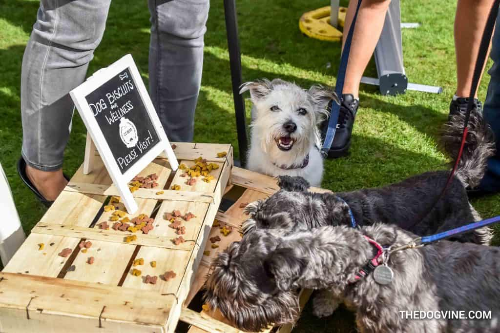 CC Bear Edibles - Chiswick House Dog Show 9