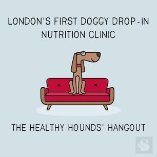 The Healthy Hounds Hangout