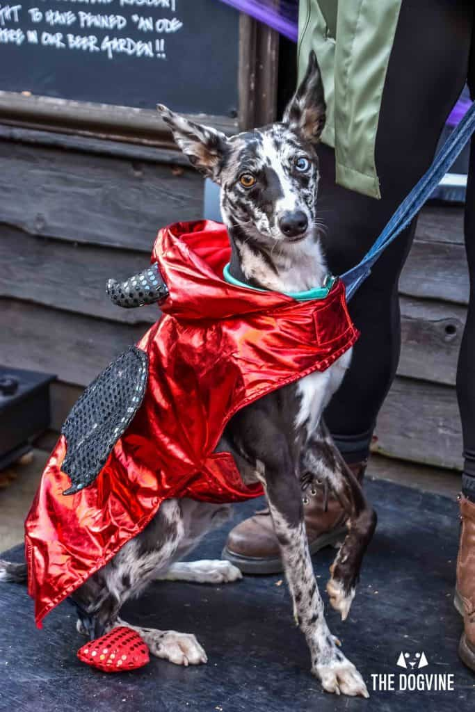 All Dogs Matter Halloween Walk and Show 2017 105