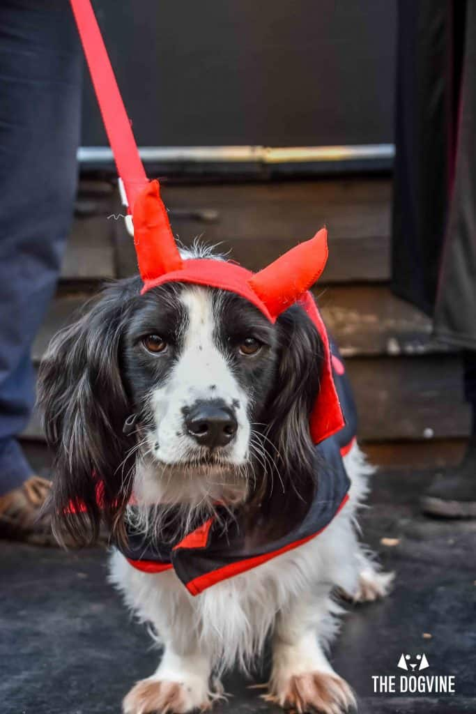 All Dogs Matter Halloween Walk and Show 2017 157