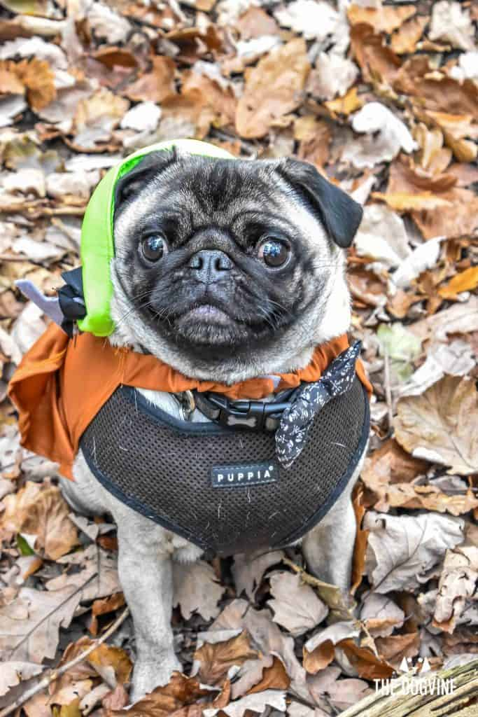 All Dogs Matter Halloween Walk and Show 2017 161