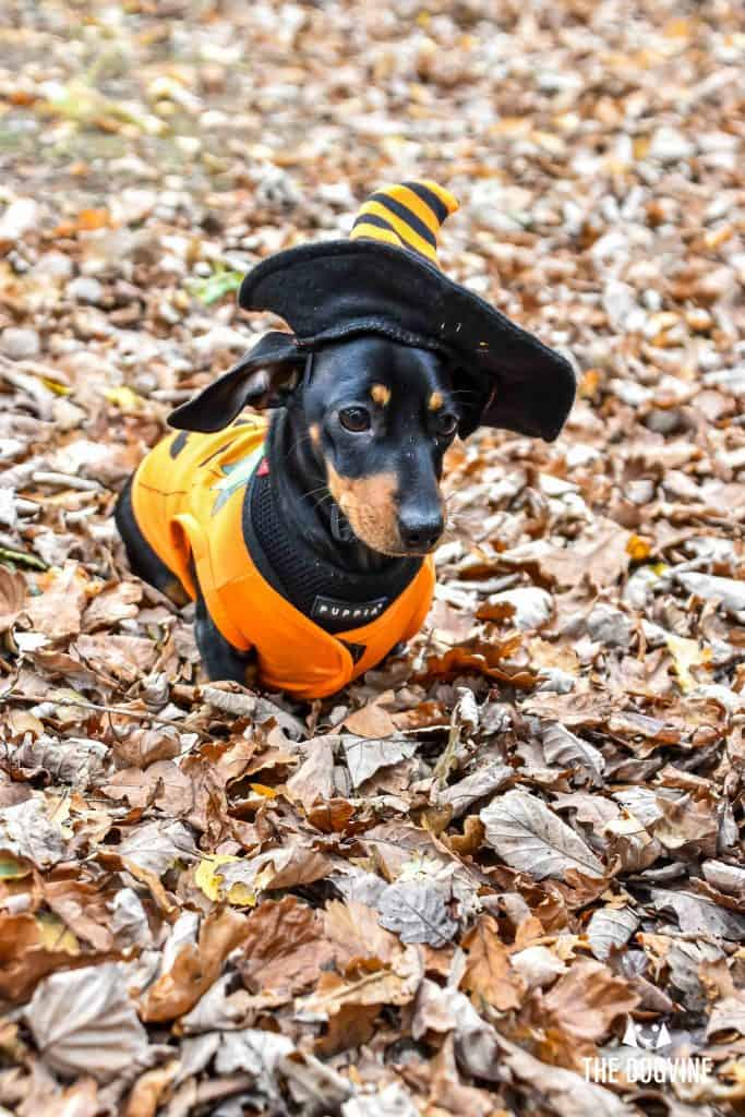All Dogs Matter Halloween Walk and Show 2017 163