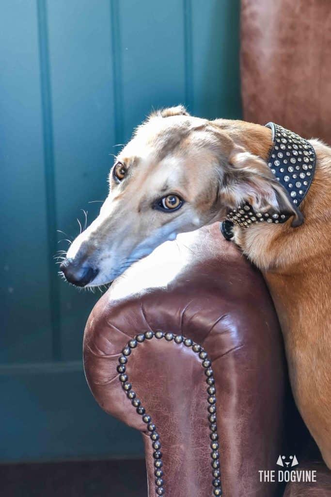 All Dogs Matter Narrowboat Doggy Brunch DSC_0226