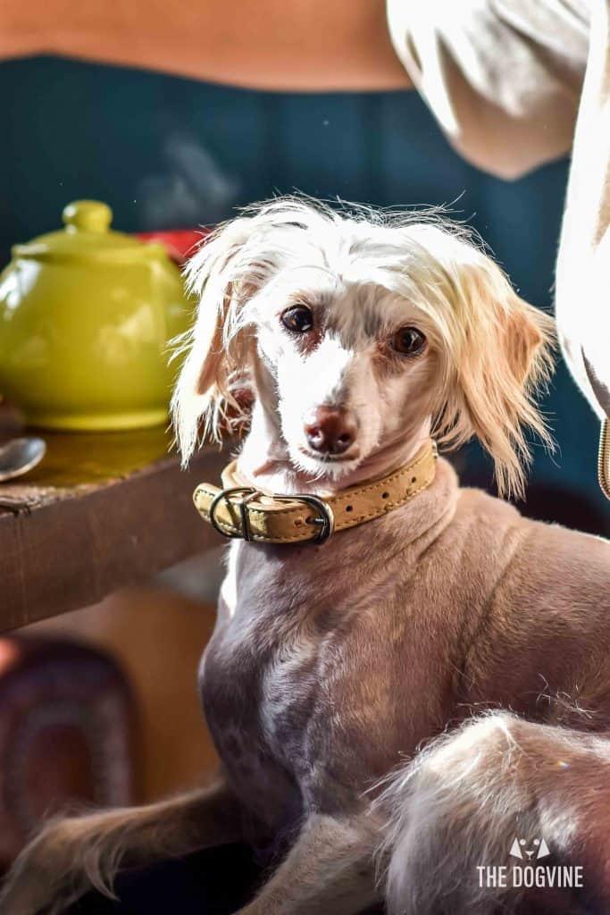 All Dogs Matter Narrowboat Doggy Brunch DSC_0271