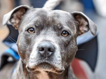 FI - All Dogs Matter Halloween Walk 2017