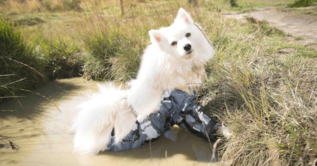FI - Dog Trousers 2