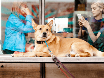 FI - Dog-Friendly Pubs Infographic | How Dog-Friendly Are The UK's Pubs?