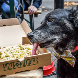 FI - Pooches Get a 'Pizza' The Action At Dog-Friendly Pizza Pilgrims