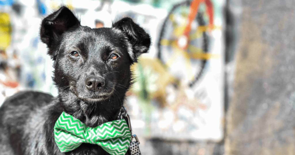 Faith The Romanian Street Dog Looking For Love