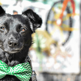 Faith The Romanian Street Dog Looking For Love