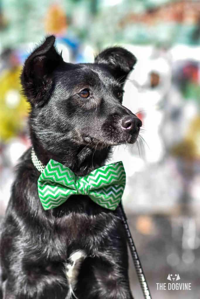 Faith The Romanian Street Dog Looking For Love DSC_0502