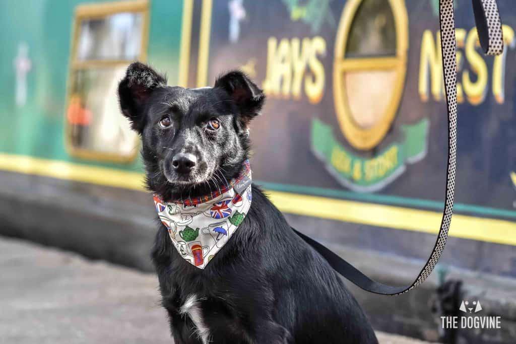 Faith The Romanian Street Dog Looking For Love DSC_0640 (1)