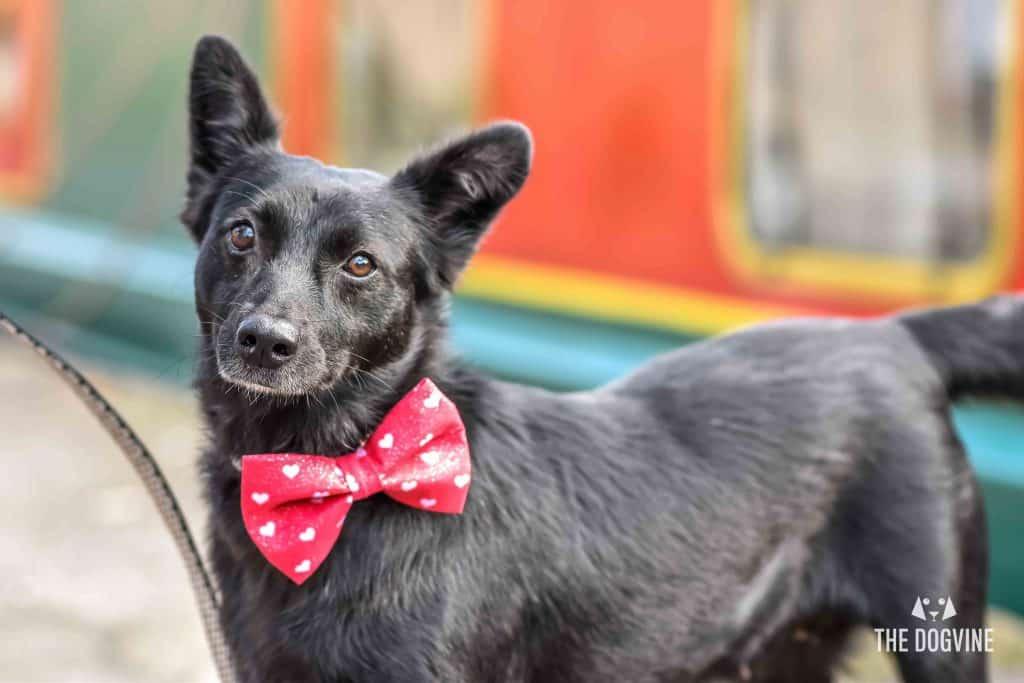 Faith The Romanian Street Dog Looking For Love DSC_0700