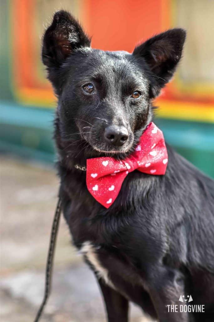 Faith The Romanian Street Dog Looking For Love DSC_0709