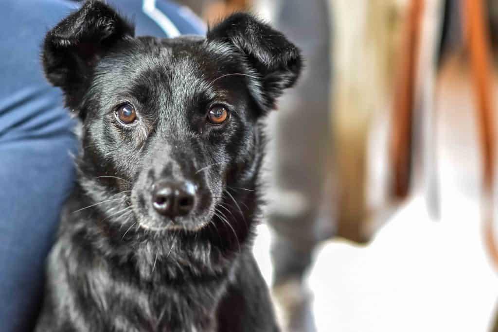Faith The Romanian Street Dog Looking For Love DSC_0939