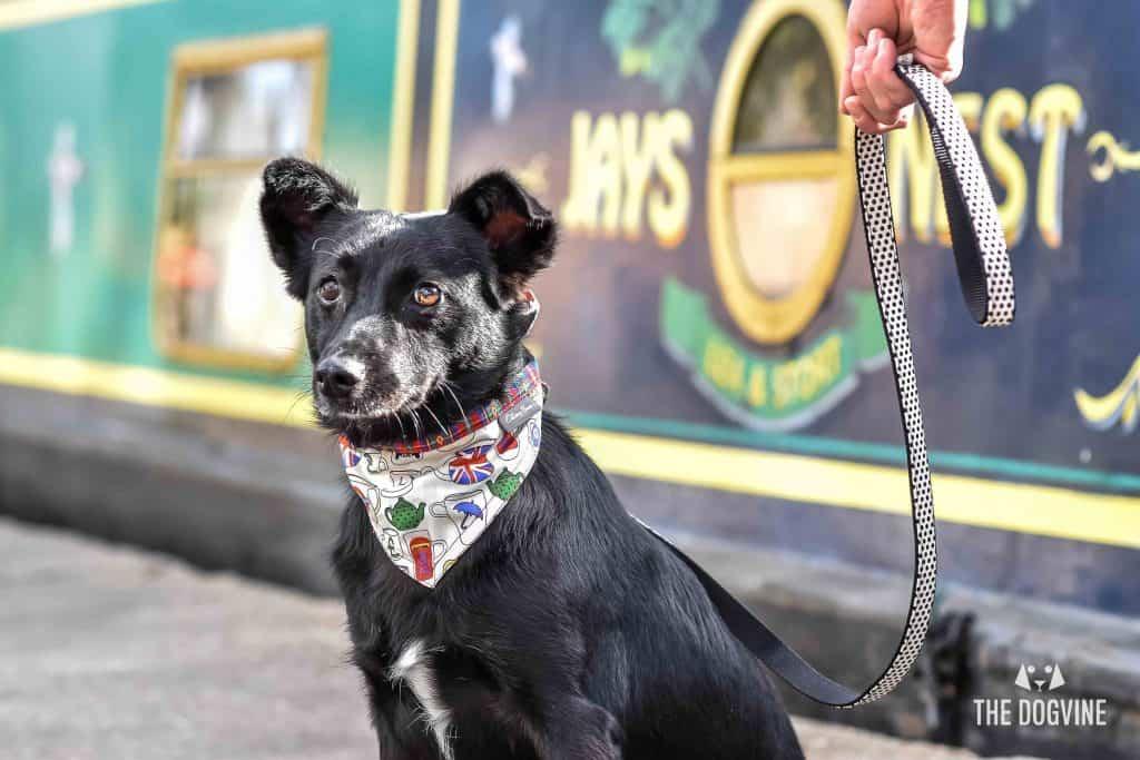 Narrowboat Doggy Brunch - Faith DSC_0638