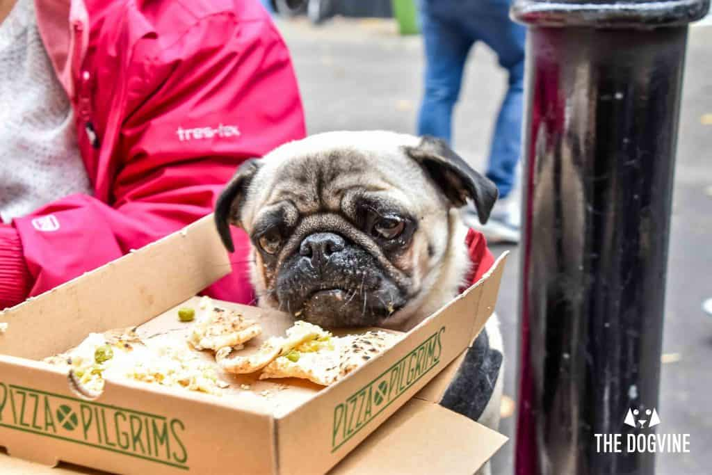 Pooches Get a 'Pizza' The Action At Dog-Friendly Pizza Pilgrims 20