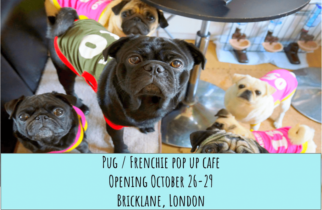 Pugs & Pals Pop Up Cafe - October 2017 Events Agenda For London Dogs