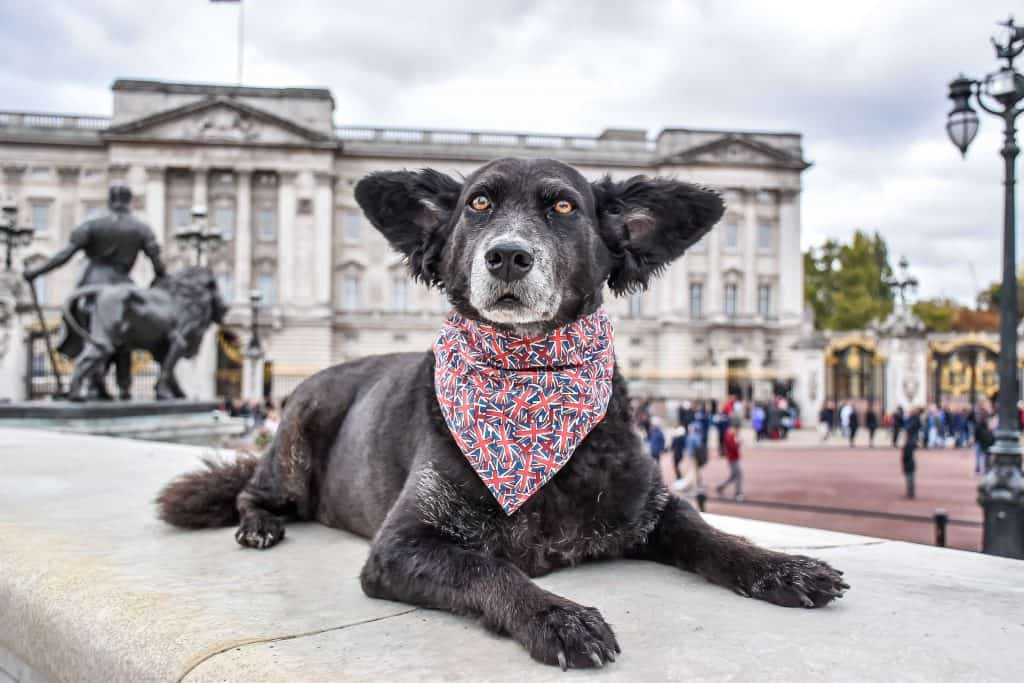 UK Dog Blogs The Dogvine Work With Us