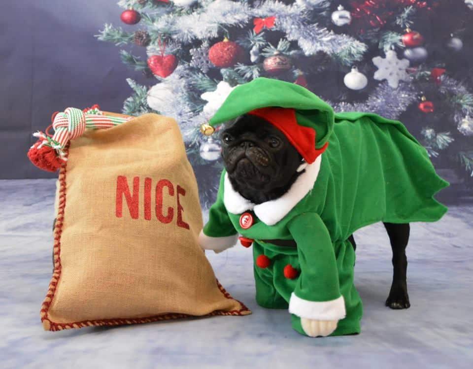 December 2017 Events Agenda For London Dogs - Christmas Pug Cafe