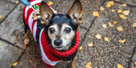 FI - December 2017 Events Agenda For London Dogs