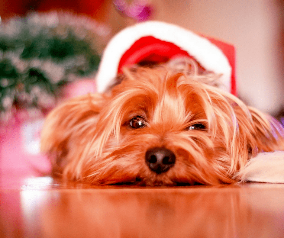 Gift Guide | 9 Glorious Gifts That Give Back To Dogs