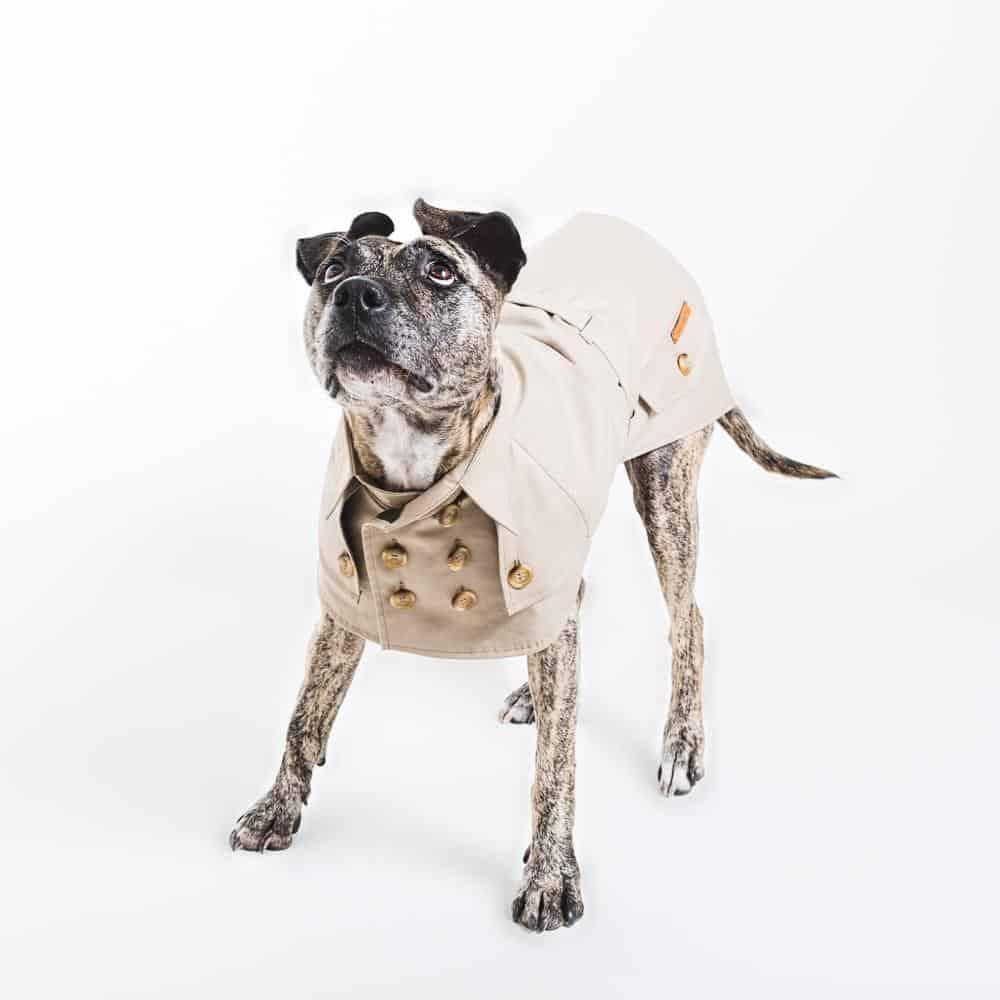 Gifts That Give Back - happystaffyme-Dog-Clothing-Trench-Coat-Dog_Jacket_5